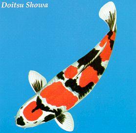 Doitsu