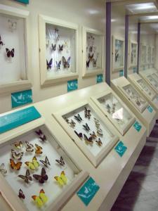 Museum bersih, spesimen dalam kondisi prima