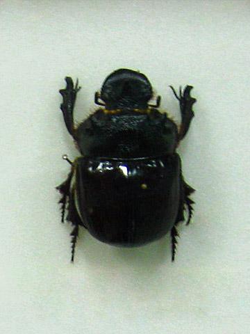 museum serangga dan taman kupu pena dunia maya